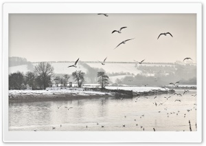 Winter Scene Black And White HD Wide Wallpaper for Widescreen
