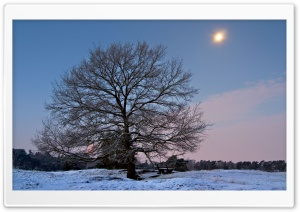 Winter Scenery 18 HD Wide Wallpaper for Widescreen