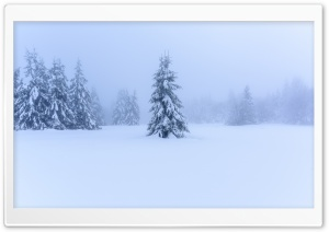 Winter Scenery HD Wide Wallpaper for Widescreen