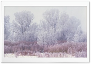 Winter Scenes 16 HD Wide Wallpaper for Widescreen