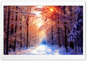 Winter Scenes 18 HD Wide Wallpaper for Widescreen
