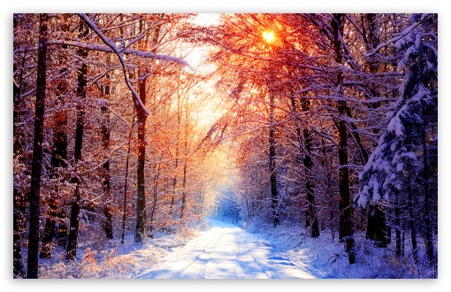 Winter Scenes 18 HD wallpaper for Wide 16:10 5:3 Widescreen WHXGA WQXGA WUXGA WXGA WGA ; HD 16:9 High Definition WQHD QWXGA 1080p 900p 720p QHD nHD ; Standard 4:3 5:4 Fullscreen UXGA XGA SVGA QSXGA SXGA ; MS 3:2 DVGA HVGA HQVGA devices ( Apple PowerBook G4 iPhone 4 3G 3GS iPod Touch ) ; Mobile VGA WVGA iPhone iPad PSP Phone - VGA QVGA Smartphone ( PocketPC GPS iPod Zune BlackBerry HTC Samsung LG Nokia Eten Asus ) WVGA WQVGA Smartphone ( HTC Samsung Sony Ericsson LG Vertu MIO ) HVGA Smartphone ( Apple iPhone iPod BlackBerry HTC Samsung Nokia ) Sony PSP Zune HD Zen ; Tablet 1&2 Android ; Dual 4:3 5:4 UXGA XGA SVGA QSXGA SXGA ;