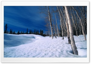 Winter Scenes 9 HD Wide Wallpaper for Widescreen