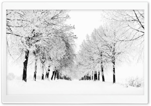 Winter Season HD Wide Wallpaper for Widescreen