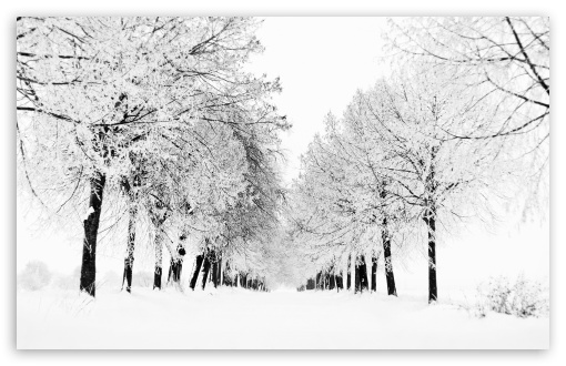Winter Season HD wallpaper for Wide 16:10 5:3 Widescreen WHXGA WQXGA WUXGA WXGA WGA ; HD 16:9 High Definition WQHD QWXGA 1080p 900p 720p QHD nHD ; Standard 4:3 5:4 3:2 Fullscreen UXGA XGA SVGA QSXGA SXGA DVGA HVGA HQVGA devices ( Apple PowerBook G4 iPhone 4 3G 3GS iPod Touch ) ; Tablet 1:1 ; iPad 1/2/Mini ; Mobile 4:3 5:3 3:2 16:9 5:4 - UXGA XGA SVGA WGA DVGA HVGA HQVGA devices ( Apple PowerBook G4 iPhone 4 3G 3GS iPod Touch ) WQHD QWXGA 1080p 900p 720p QHD nHD QSXGA SXGA ; Dual 16:10 5:3 16:9 4:3 5:4 WHXGA WQXGA WUXGA WXGA WGA WQHD QWXGA 1080p 900p 720p QHD nHD UXGA XGA SVGA QSXGA SXGA ;