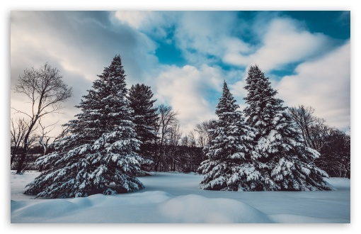 Winter, Snow, Pine Trees, Landscape, Nature UltraHD Wallpaper for Wide 16:10 5:3 Widescreen WHXGA WQXGA WUXGA WXGA WGA ; UltraWide 21:9 24:10 ; 8K UHD TV 16:9 Ultra High Definition 2160p 1440p 1080p 900p 720p ; UHD 16:9 2160p 1440p 1080p 900p 720p ; Standard 4:3 5:4 3:2 Fullscreen UXGA XGA SVGA QSXGA SXGA DVGA HVGA HQVGA ( Apple PowerBook G4 iPhone 4 3G 3GS iPod Touch ) ; iPad 1/2/Mini ; Mobile 4:3 5:3 3:2 16:9 5:4 - UXGA XGA SVGA WGA DVGA HVGA HQVGA ( Apple PowerBook G4 iPhone 4 3G 3GS iPod Touch ) 2160p 1440p 1080p 900p 720p QSXGA SXGA ;