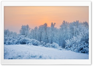 Winter Snow Trees HD Wide Wallpaper for Widescreen