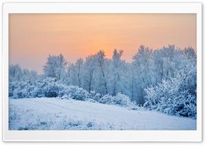 Winter Snow Trees Ultra HD Wallpaper for 4K UHD Widescreen desktop, tablet & smartphone