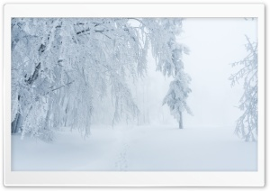 Winter Snow White Fog Scenery Ultra HD Wallpaper for 4K UHD Widescreen desktop, tablet & smartphone