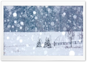 Winter Snowing HD Wide Wallpaper for Widescreen