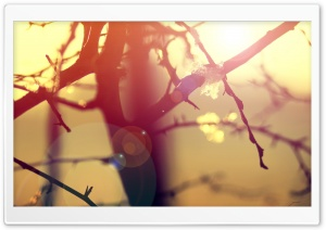 Winter Sunlight Lens Flare HD Wide Wallpaper for Widescreen
