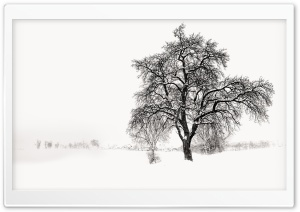 Winter Tree HD Wide Wallpaper for Widescreen