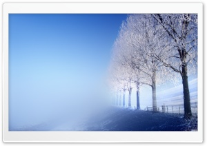 Winter Trees HD Wide Wallpaper for Widescreen