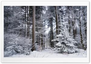 Winter, Trees, Forest, Snow Ultra HD Wallpaper for 4K UHD Widescreen desktop, tablet & smartphone