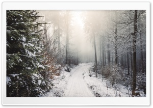 Winter, Trees, Forest, Snow, Path Ultra HD Wallpaper for 4K UHD Widescreen desktop, tablet & smartphone