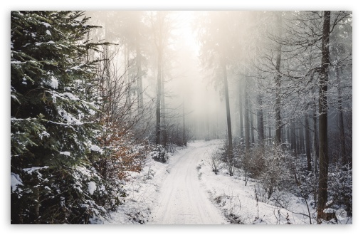 Winter, Trees, Forest, Snow, Path UltraHD Wallpaper for Wide 16:10 5:3 Widescreen WHXGA WQXGA WUXGA WXGA WGA ; 8K UHD TV 16:9 Ultra High Definition 2160p 1440p 1080p 900p 720p ; Standard 3:2 Fullscreen DVGA HVGA HQVGA ( Apple PowerBook G4 iPhone 4 3G 3GS iPod Touch ) ; Mobile 5:3 3:2 16:9 - WGA DVGA HVGA HQVGA ( Apple PowerBook G4 iPhone 4 3G 3GS iPod Touch ) 2160p 1440p 1080p 900p 720p ;