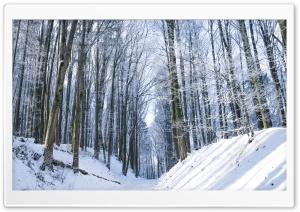 Winter, Trees, Forest, Snow, Path Ultra HD Wallpaper for 4K UHD Widescreen desktop, tablet & smartphone