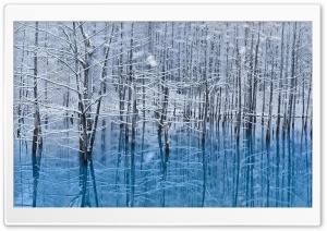 Winter Trees Reflected In The Lake HD Wide Wallpaper for Widescreen