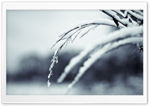 Winter Twigs, Bokeh HD Wide Wallpaper for Widescreen