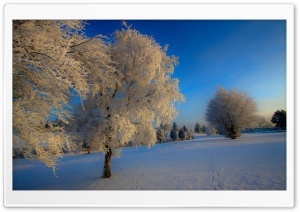 Winter Twilight HD Wide Wallpaper for Widescreen