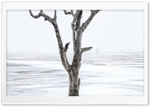 Winter Vision HD Wide Wallpaper for Widescreen