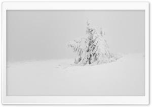 Winter White Snow Tree Aesthetic HD Wide Wallpaper for 4K UHD Widescreen desktop & smartphone