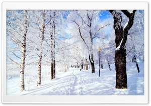 Winter Wonderland HD Wide Wallpaper for Widescreen