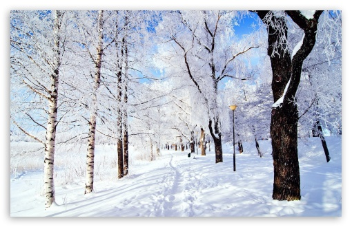 Winter Wonderland HD wallpaper for Wide 16:10 5:3 Widescreen WHXGA WQXGA WUXGA WXGA WGA ; HD 16:9 High Definition WQHD QWXGA 1080p 900p 720p QHD nHD ; Standard 4:3 5:4 3:2 Fullscreen UXGA XGA SVGA QSXGA SXGA DVGA HVGA HQVGA devices ( Apple PowerBook G4 iPhone 4 3G 3GS iPod Touch ) ; Tablet 1:1 ; iPad 1/2/Mini ; Mobile 4:3 5:3 3:2 16:9 5:4 - UXGA XGA SVGA WGA DVGA HVGA HQVGA devices ( Apple PowerBook G4 iPhone 4 3G 3GS iPod Touch ) WQHD QWXGA 1080p 900p 720p QHD nHD QSXGA SXGA ; Dual 16:10 5:3 16:9 4:3 5:4 WHXGA WQXGA WUXGA WXGA WGA WQHD QWXGA 1080p 900p 720p QHD nHD UXGA XGA SVGA QSXGA SXGA ;