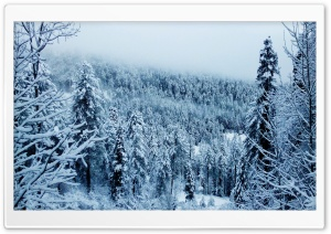 Winters Frost HD Wide Wallpaper for Widescreen