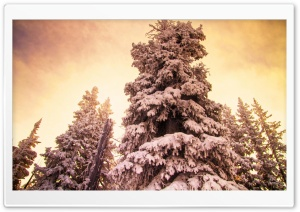Winters Warmth HD Wide Wallpaper for Widescreen