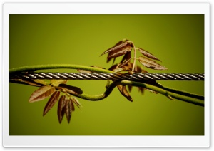Wire And Plant HD Wide Wallpaper for Widescreen