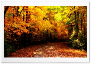 Wisconsin Autumn HD Wide Wallpaper for Widescreen