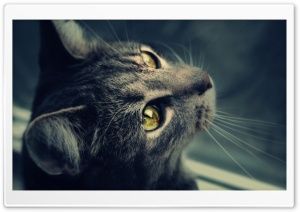 Wishful Cat HD Wide Wallpaper for Widescreen