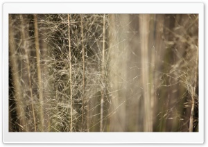 Wispy Grass HD Wide Wallpaper for Widescreen