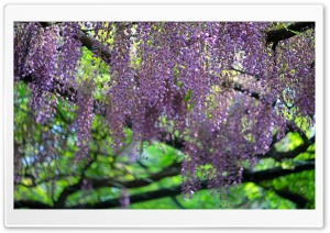 Wisteria Roof HD Wide Wallpaper for Widescreen