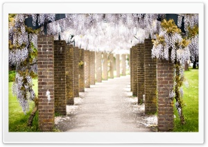 Wisteria Tree Tunnel Ultra HD Wallpaper for 4K UHD Widescreen desktop, tablet & smartphone
