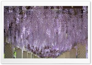 Wisteria Tree Tunnel HD Wide Wallpaper for Widescreen