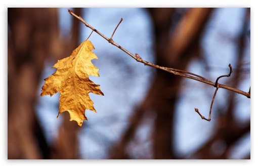 Withered Oak Leaf, Autumn ❤ 4K UHD Wallpaper for Wide 16:10 5:3 Widescreen WHXGA WQXGA WUXGA WXGA WGA ; 4K UHD 16:9 Ultra High Definition 2160p 1440p 1080p 900p 720p ; Standard 4:3 5:4 3:2 Fullscreen UXGA XGA SVGA QSXGA SXGA DVGA HVGA HQVGA ( Apple PowerBook G4 iPhone 4 3G 3GS iPod Touch ) ; Tablet 1:1 ; iPad 1/2/Mini ; Mobile 4:3 5:3 3:2 16:9 5:4 - UXGA XGA SVGA WGA DVGA HVGA HQVGA ( Apple PowerBook G4 iPhone 4 3G 3GS iPod Touch ) 2160p 1440p 1080p 900p 720p QSXGA SXGA ;