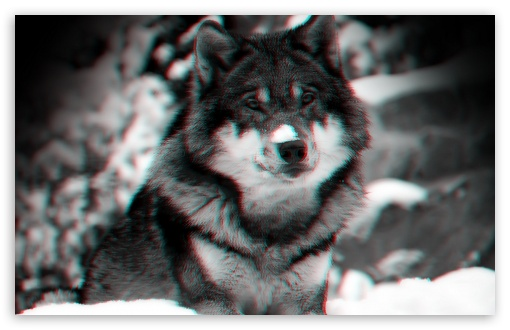 Wolf ❤ 4K UHD Wallpaper for Wide 16:10 5:3 Widescreen WHXGA WQXGA WUXGA WXGA WGA ; 4K UHD 16:9 Ultra High Definition 2160p 1440p 1080p 900p 720p ; Standard 4:3 5:4 3:2 Fullscreen UXGA XGA SVGA QSXGA SXGA DVGA HVGA HQVGA ( Apple PowerBook G4 iPhone 4 3G 3GS iPod Touch ) ; Tablet 1:1 ; iPad 1/2/Mini ; Mobile 4:3 5:3 3:2 16:9 5:4 - UXGA XGA SVGA WGA DVGA HVGA HQVGA ( Apple PowerBook G4 iPhone 4 3G 3GS iPod Touch ) 2160p 1440p 1080p 900p 720p QSXGA SXGA ;