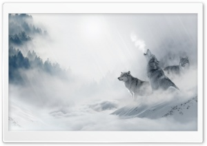 Wolf Howling HD Wide Wallpaper for Widescreen