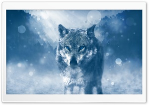 Wolf Winter Ultra HD Wallpaper for 4K UHD Widescreen desktop, tablet & smartphone