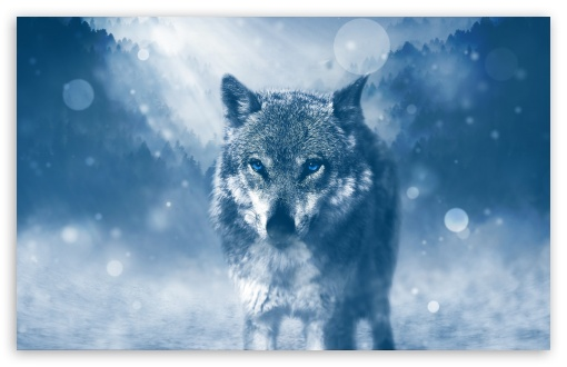 Wolf Winter HD wallpaper for Wide 16:10 5:3 Widescreen WHXGA WQXGA WUXGA WXGA WGA ; HD 16:9 High Definition WQHD QWXGA 1080p 900p 720p QHD nHD ; Standard 4:3 5:4 3:2 Fullscreen UXGA XGA SVGA QSXGA SXGA DVGA HVGA HQVGA devices ( Apple PowerBook G4 iPhone 4 3G 3GS iPod Touch ) ; iPad 1/2/Mini ; Mobile 4:3 5:3 3:2 16:9 5:4 - UXGA XGA SVGA WGA DVGA HVGA HQVGA devices ( Apple PowerBook G4 iPhone 4 3G 3GS iPod Touch ) WQHD QWXGA 1080p 900p 720p QHD nHD QSXGA SXGA ;