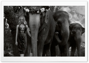 Woman Leading the Elephants HD Wide Wallpaper for 4K UHD Widescreen desktop & smartphone