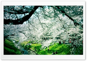 Wonderful Spring Day HD Wide Wallpaper for Widescreen