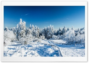 Wonderland Winter HD Wide Wallpaper for 4K UHD Widescreen desktop & smartphone