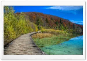 Wood Lake Path HD Wide Wallpaper for Widescreen
