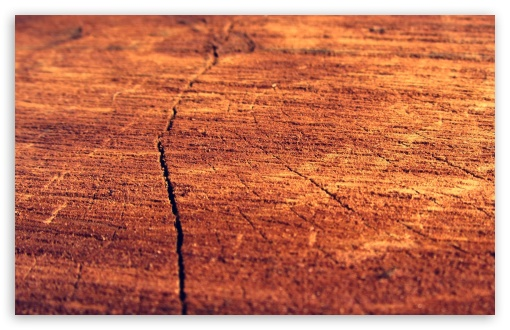 Wood Log HD wallpaper for Wide 16:10 5:3 Widescreen WHXGA WQXGA WUXGA WXGA WGA ; HD 16:9 High Definition WQHD QWXGA 1080p 900p 720p QHD nHD ; Standard 4:3 5:4 3:2 Fullscreen UXGA XGA SVGA QSXGA SXGA DVGA HVGA HQVGA devices ( Apple PowerBook G4 iPhone 4 3G 3GS iPod Touch ) ; Tablet 1:1 ; iPad 1/2/Mini ; Mobile 4:3 5:3 3:2 16:9 5:4 - UXGA XGA SVGA WGA DVGA HVGA HQVGA devices ( Apple PowerBook G4 iPhone 4 3G 3GS iPod Touch ) WQHD QWXGA 1080p 900p 720p QHD nHD QSXGA SXGA ;