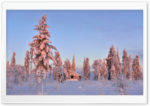 Wooden House In Winter Forest HD Wide Wallpaper for 4K UHD Widescreen desktop & smartphone