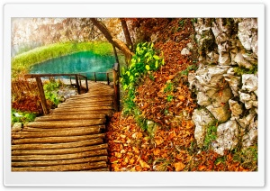 Wooden Path HD Wide Wallpaper for Widescreen
