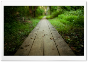 Wooden Path HD Wide Wallpaper for 4K UHD Widescreen desktop & smartphone